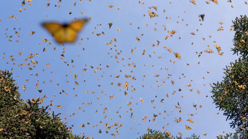 Naturfotografie: Mit Schmetterlingen auf Weltreise