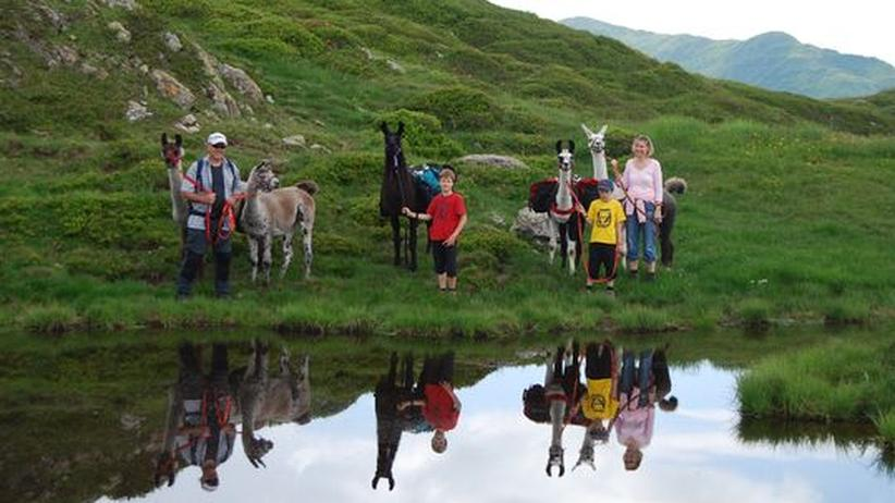 Alpen: Die mit den Lamas wandern