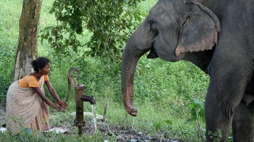 Wassermangel: In Indien wird das Grundwasser knapp