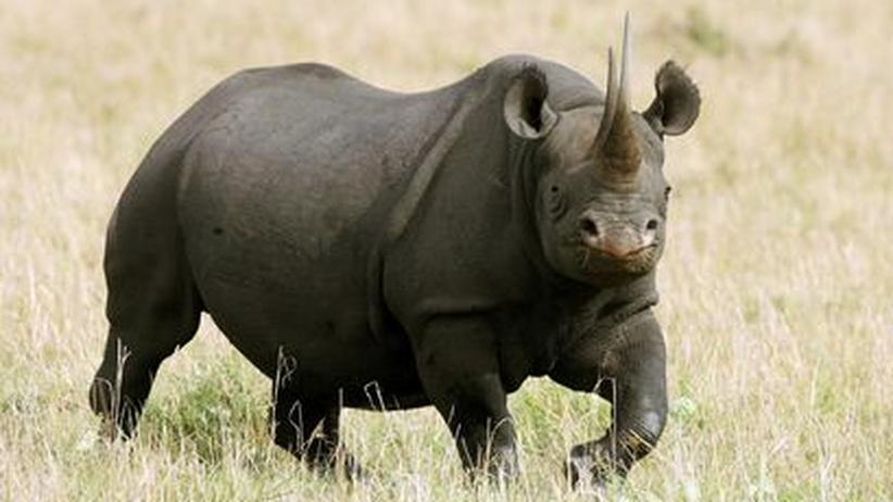 Spitzmaulnashörner und Breitmaulnashörner sind in Afrika vom Aussterben bedroht
