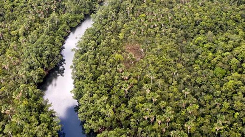 Brasilien: Das Pantanal ist ein sehr artenreiches Feuchtgebiet