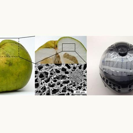 Uni Freiburg: liv MatS – Living, Adaptive and Energyautonomous Materials Systems