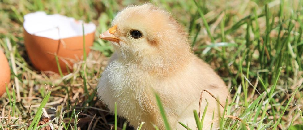 Uni Leipzig: Auf der Suche nach Henne und Ei