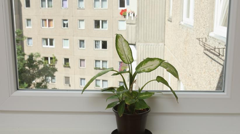 Topfpflanze im Ostel in Ostberlin