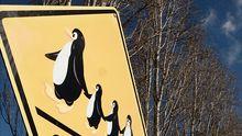 Mein digitaler Schutzschild: Ubuntu – die Basis für einen sicheren Computer