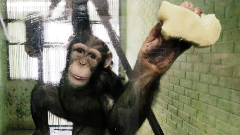 monkey content