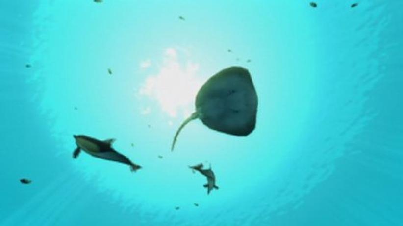 Endless Ocean 2: Entspannen beim Tauchkurs