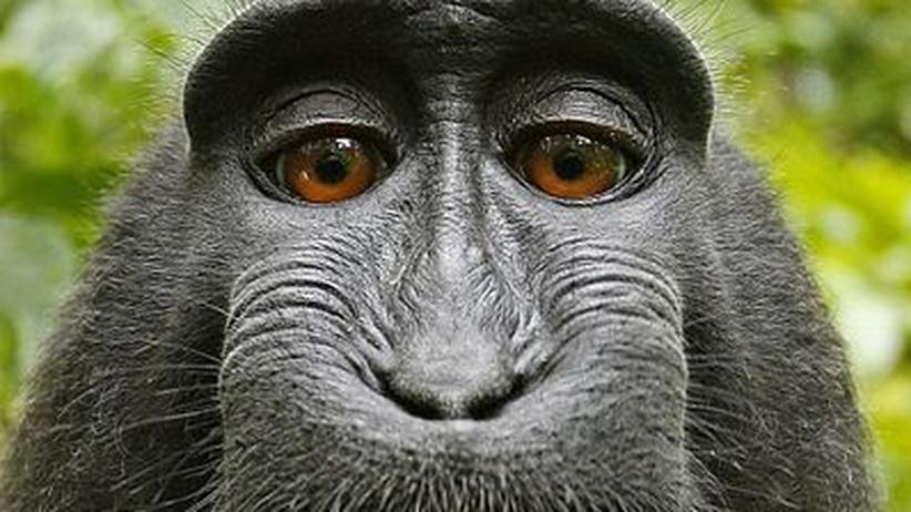 Selfie eines Makaken-Weibchens