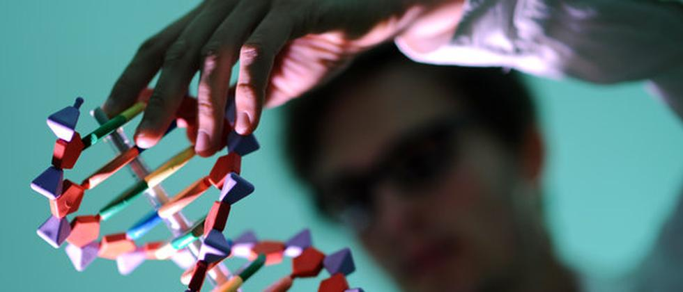 Ein Mann betrachtet ein DNA-Modell.