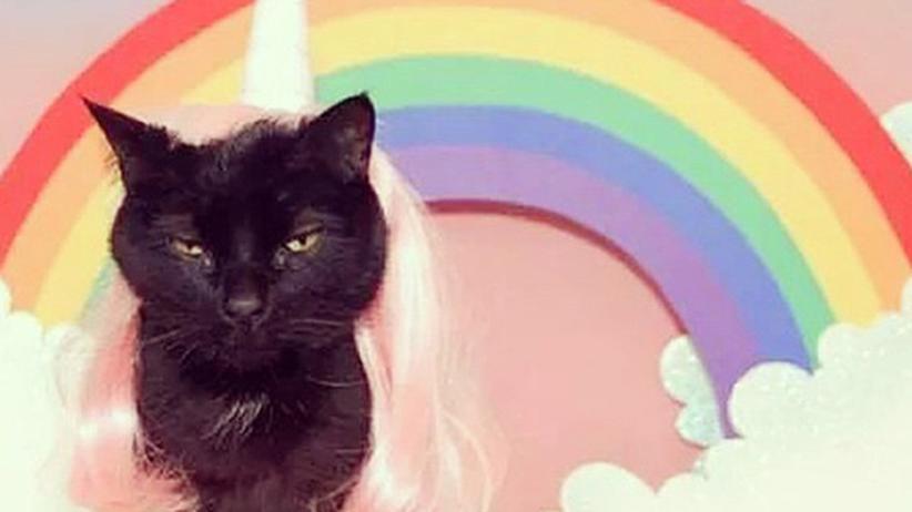 YouTube: Findet man auch auf Instagram: Rainbow Unicorn Cat.