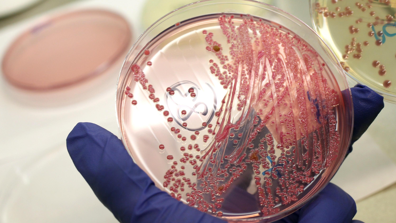 So lassen sich Videos in Bakterien speichern