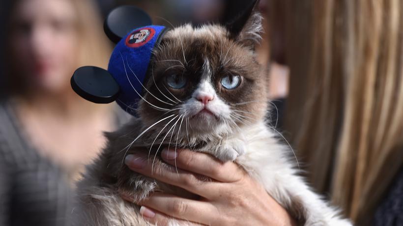 Grumpy Cat Wir Hatten Spaß Es War Furchtbar Zeit Online