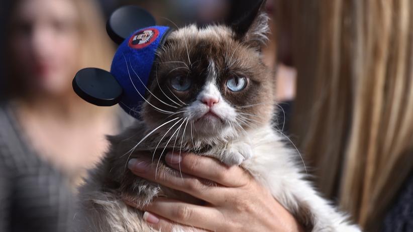 Grumpy Cat: Wir hatten Spaß, es war furchtbar