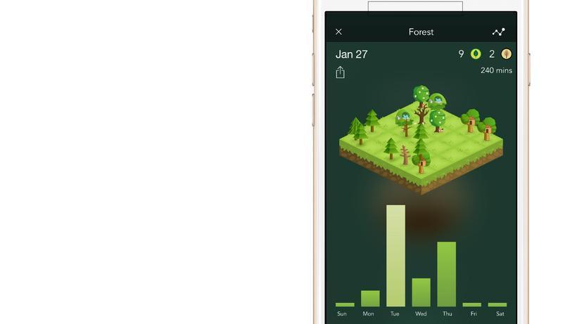 Forest Bäume Pflanzen Zur Konzentration Zeit Online