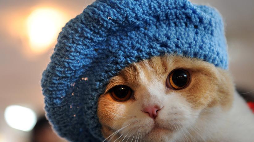 Katzenvideos: Sooo niedlich!