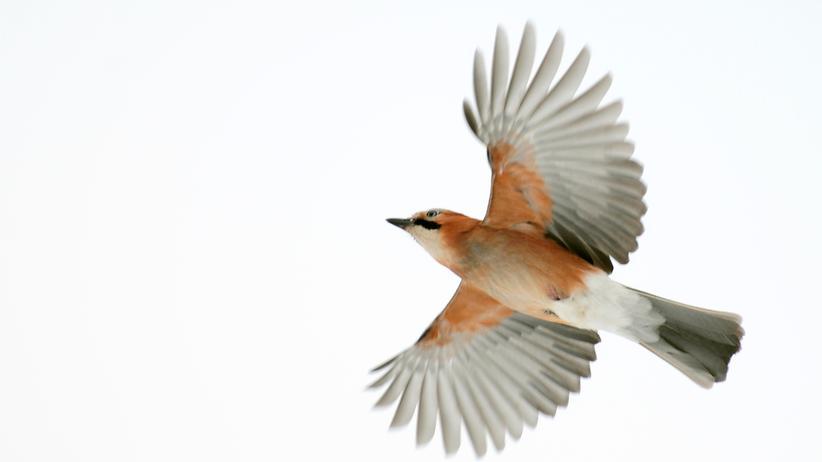 Birdwatcher: Vogelfrei