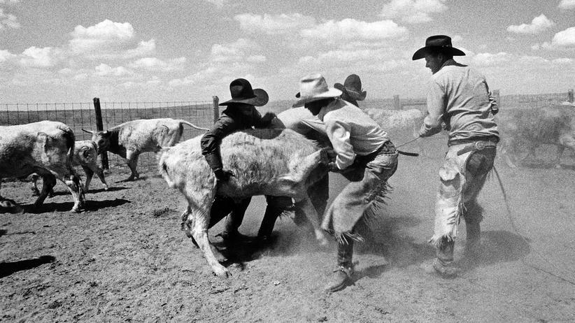 Texas: Cowboy ist auch nur ein Job