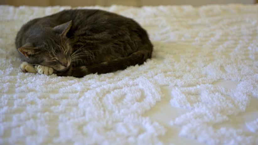 Katzen: Talentiert im müde Herumliegen