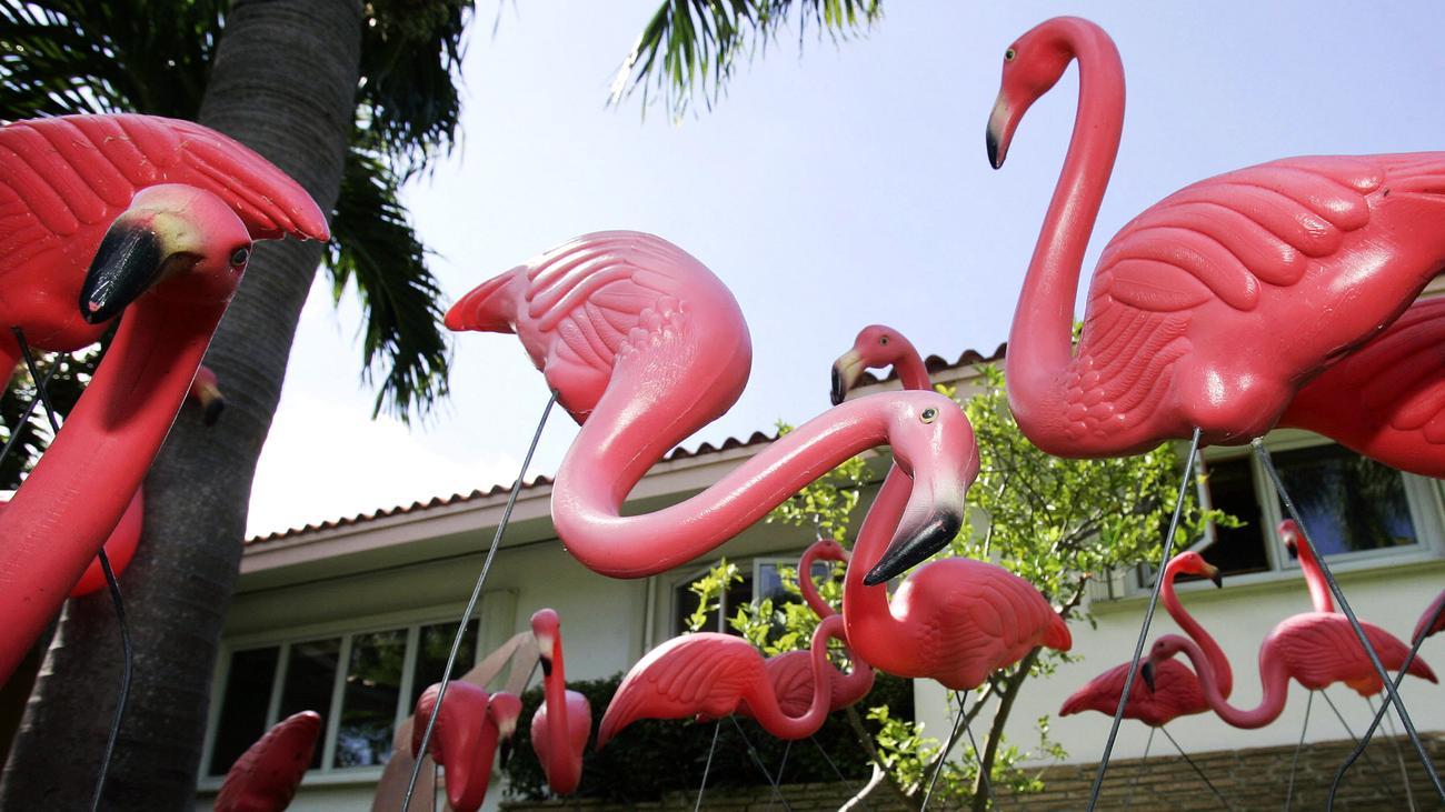 Flamingo: Was willst du Vogel hier?