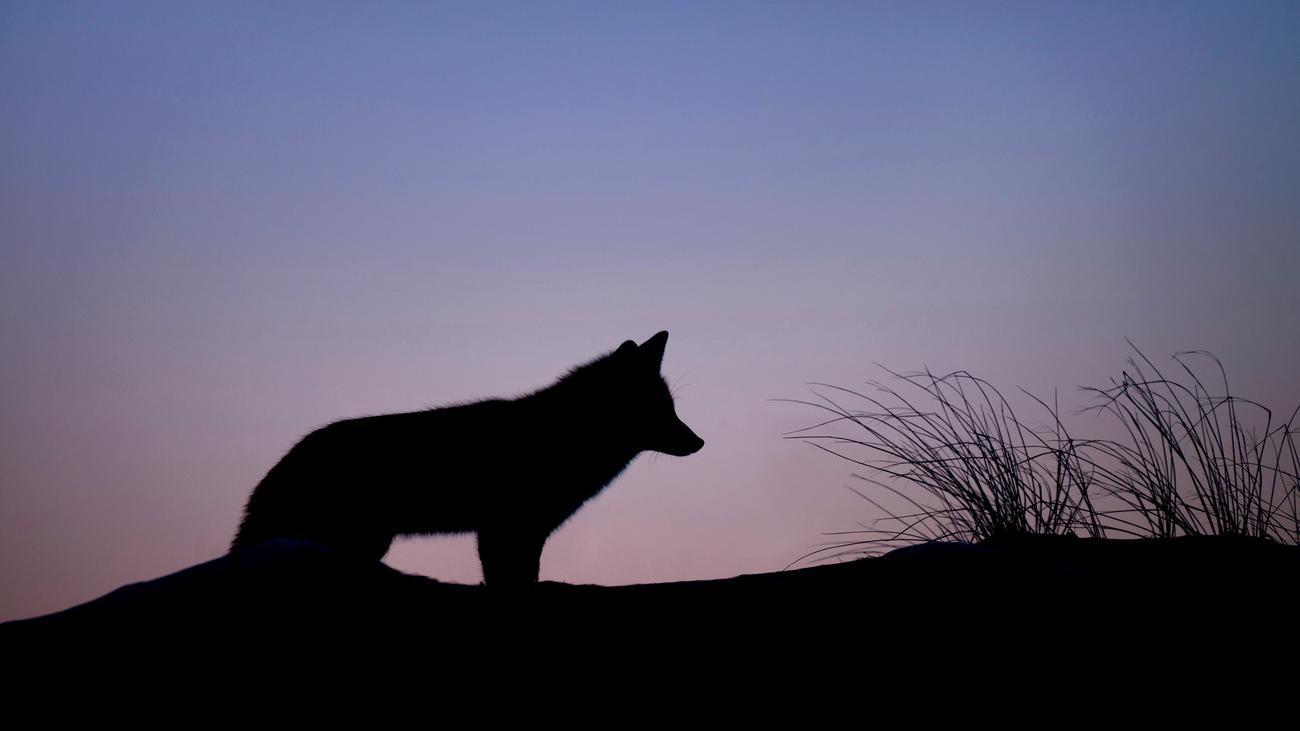 Eine Wildnis in Deutschland ohne Mensch und Jagd?