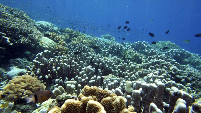 Meeresbiologie: Finde alle Nemos