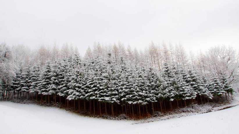 """""""Vielen Dank für alles"""": Allein in arktischer Nacht"""