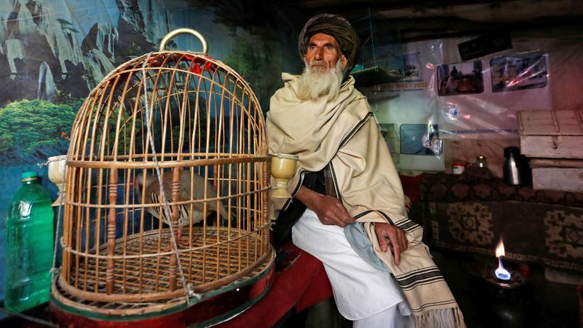 Vogelmarkt in Kabul: Singst du mir noch ein Lied?