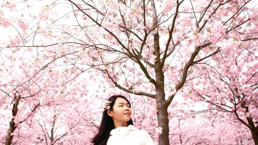 Japan-Reise: Rosaroter Rausch
