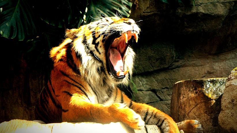 Twitter: Na, aufgepasst? Was könnten Twitter und ein Tiger gemeinsam haben?