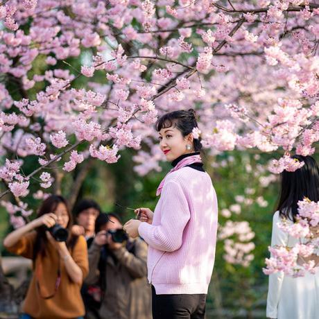 Kirschblüte: Frühlingsfront