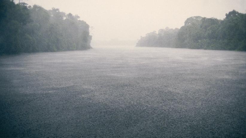 Urlaub: Im Regenwald von Manaus verschwimmen Oben und Unten.