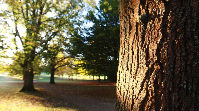 Teutoburger Wald: Der Naturcoach meint: Bäume spenden nicht nur im Kamin Energie.