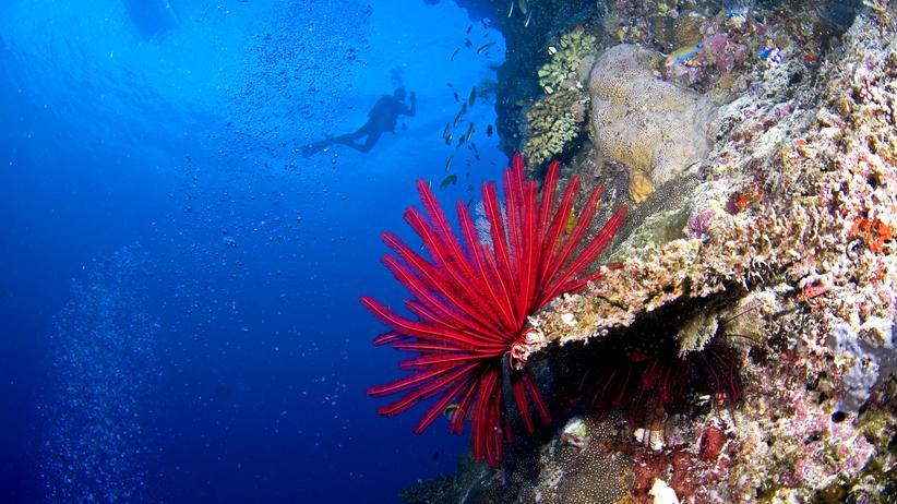 Great Barrier Reef: Im Giftschrank der Welt