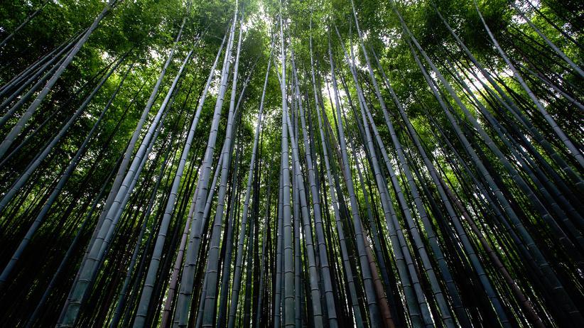 Bali: Rauschen im Bambuswald