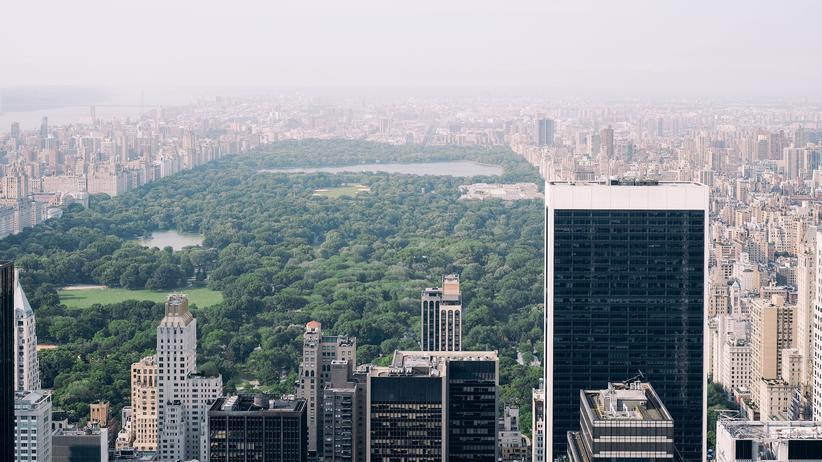 Central Park: Das weite Grün des Central Parks zieht Vögel magisch an