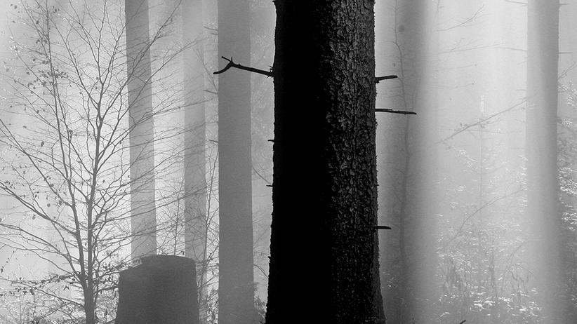 Schwarzwald: Birkenweiß und Tannengrau