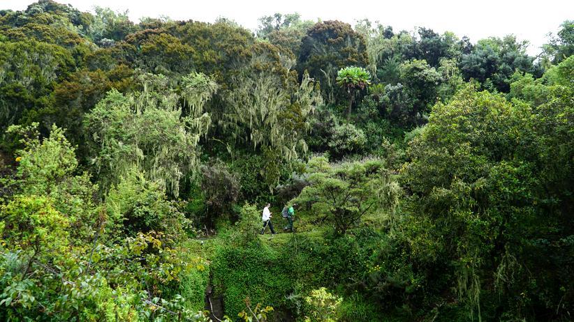 Mount Meru: Kilis kleiner Bruder