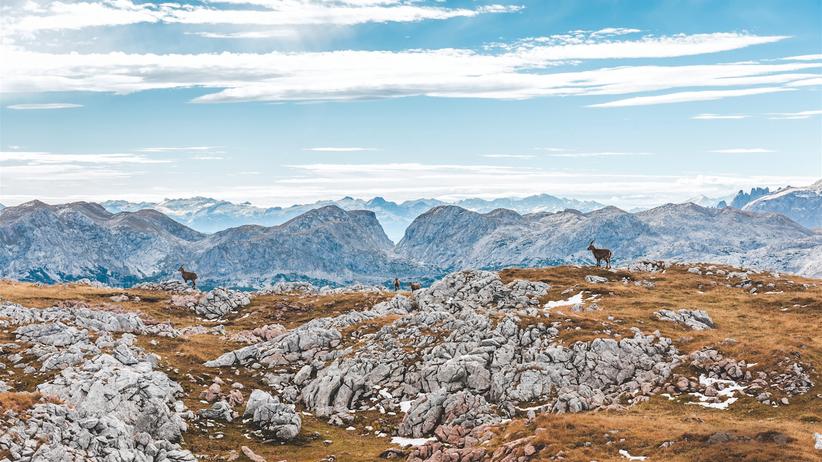 Alpen-Nationalpark: Es geht aufwärts