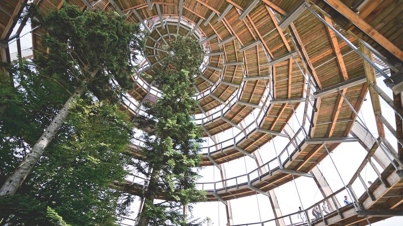Borkenkäfer: Ein Wald mit Perspektiven: Im Nationalparkzentrum Lusen führt ein Baumwipfelpfad 44 Meter in die Höhe, auf dem Lusen haben Wanderer einen beeindruckenden Blick.