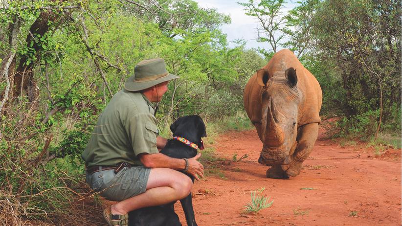 Nashorn: Unter Beobachtung: Anthony Baber hat keine Angst vor, sondern um seine Nashornbullen. In seinem Privatreservat in Südafrika wurden schon drei Nashörner von Wilderern getötet. Seitdem werden sie rund um die Uhr bewacht.