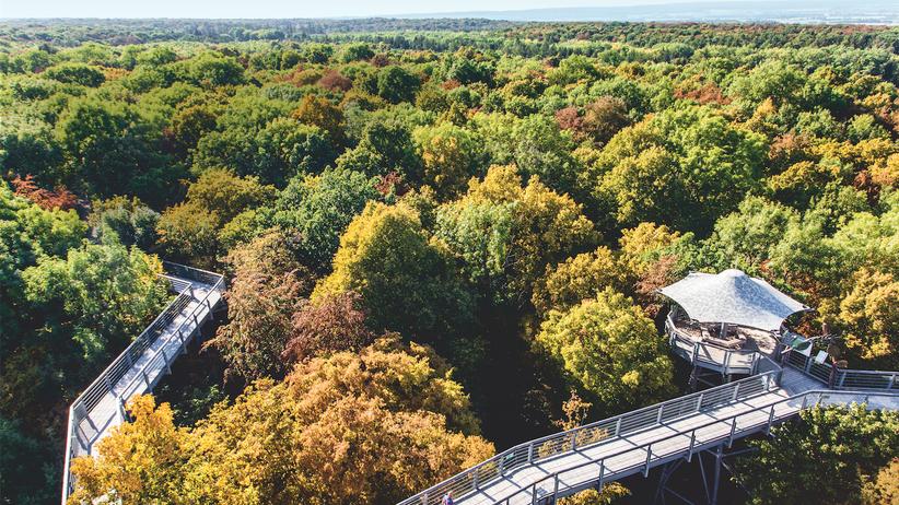 Nationalpark Hainich: Buchen muss man hier nicht suchen, sie sind überall. Von der 41 Meter hohen Aussichtsplattform geht der Blick auf den Baumkronenpfad über Deutschlands größten zusammenhängenden Laubwald.