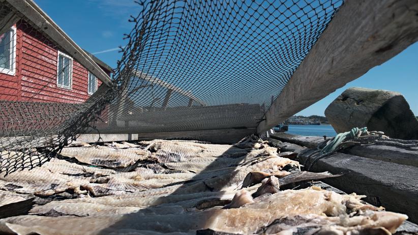 Neufundland: Die Fangfrage