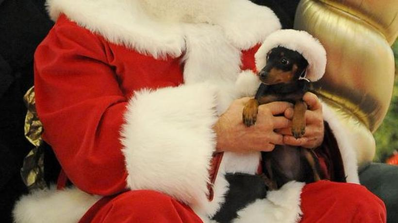Haustiere Tierische Weihnacht Zeit Online