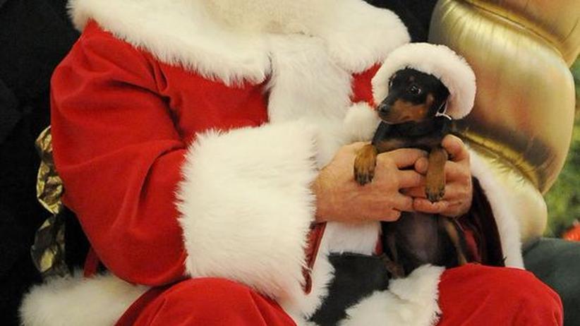 Haustiere: Tierische Weihnacht