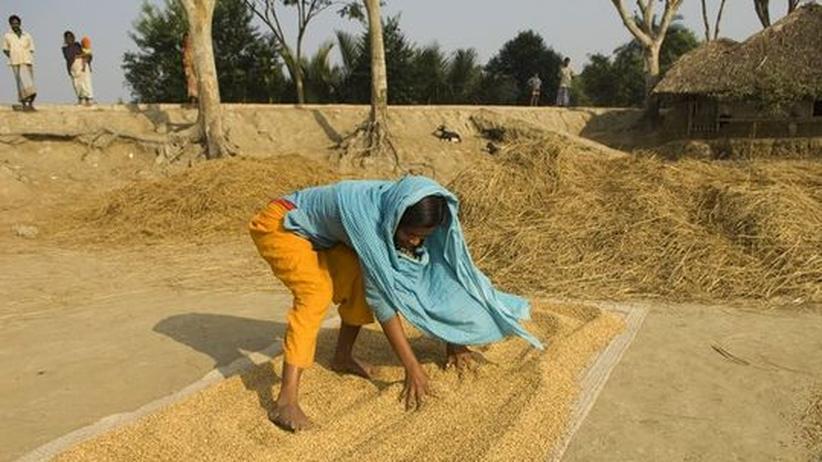 Spendenaufruf: Reis ist das Hauptnahrungsmittel in Bangaldesh. Doch wegen der Versalzung des Wassers wächst er in vielen Regionen des Landes nur noch schlecht