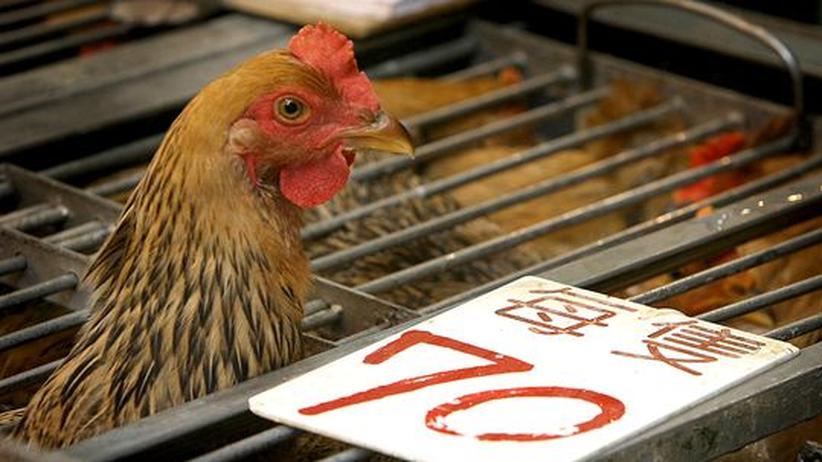 Virus: Hongkong meldet Vogelgrippe-Infektion bei Menschen