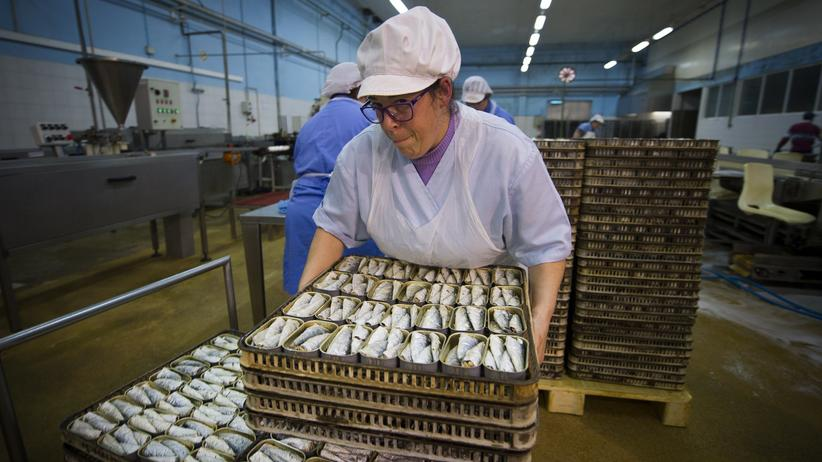 Zeitgeist: Arbeiterin in einer Sardinenfabrik in der Nähe von Porto