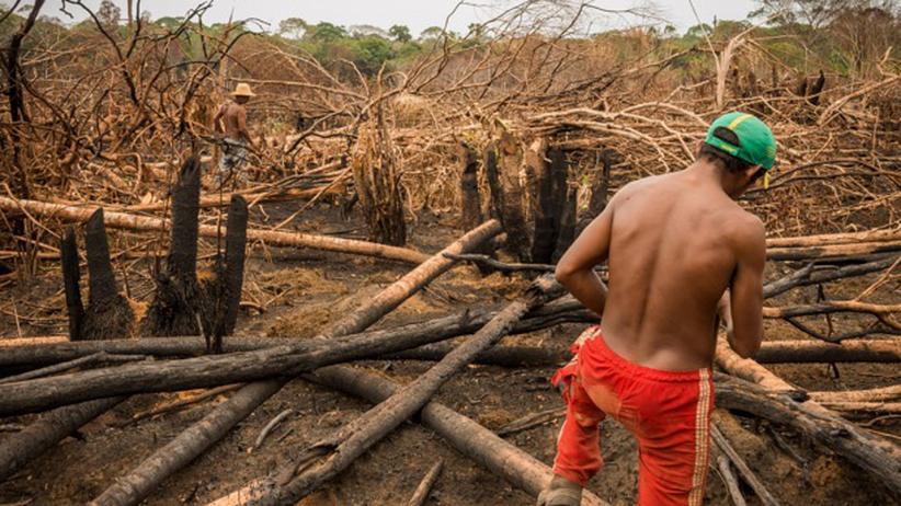 Siedler schlagen illegal Holz in einem Indianerreservat.