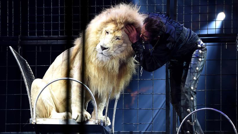Tierschutz: Löwe in einer Zirkusvorstellung 2016 in München