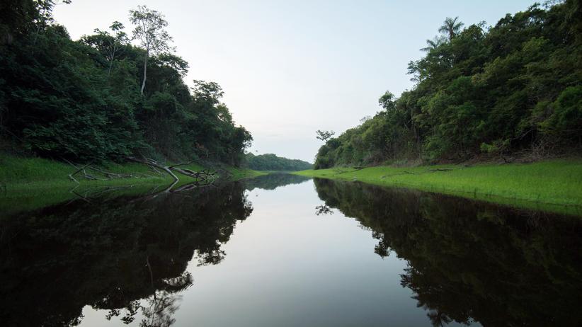 Brasilien: Der Rio Negro, in den das Greenpeace-Flugzeug stürzte